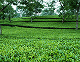 Tea Exporters in Sri Lanka - Ceylon Tea - Tea - Sri Lanka Tea Exporters - Ceylon Tea Guide – Guide to Ceylon Tea – Guide to exporting tea from Sri Lanka – Sri Lanka Tea Information by Ceylon Black Tea Exports – Ceylon Tea Guide of reputed Tea Exporters in Sri Lanka – Ceylon Tea Exporters List – Ceylon Tea Exporters Guide – Sri Lanka Tea Exporters – Tea Exporters in Sri Lanka